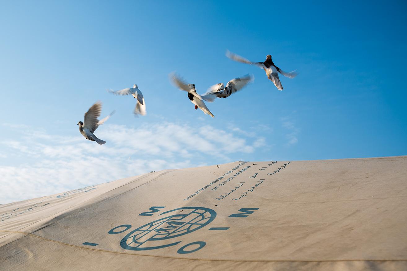 04_piegeon-flying-tent-refugee-camp-iraq
